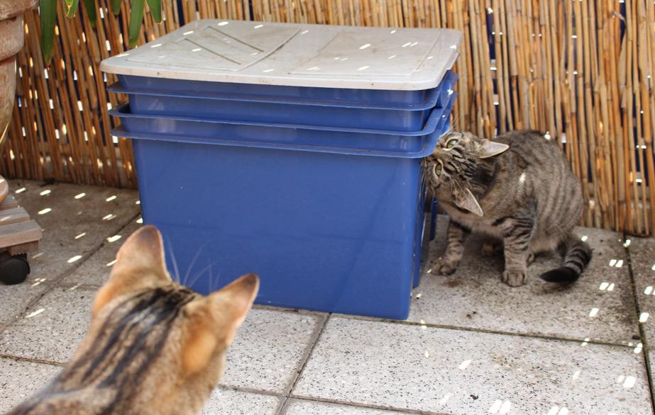 Haustier trifft Wurmkiste