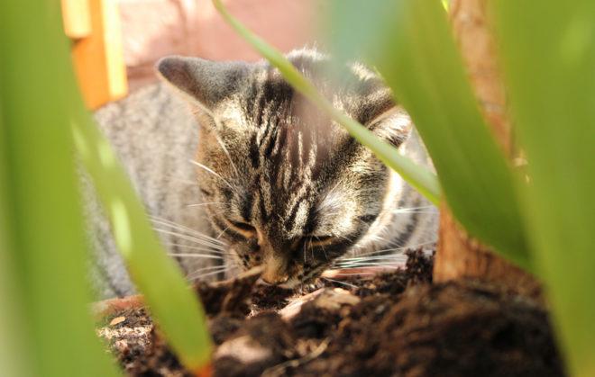 Haustier trifft Wurmkompost