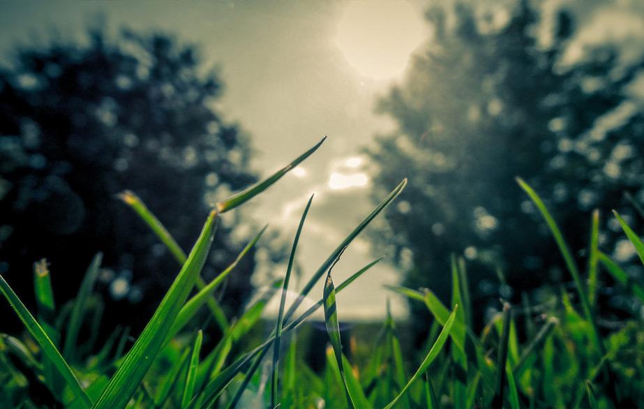 Die Wurmkiste im Sommer