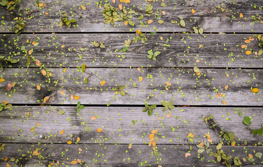Berliner Kiste Wurmkiste wilma in der wurmkiste wurmkompost trifft gardening